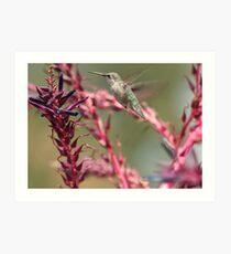 Hummingbird - Huntington Gardens Art Print