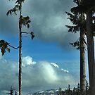 Trees and Sky by Jann Ashworth