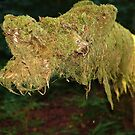 Mossy Dog by Jann Ashworth