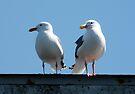 seagull buddies by tego53