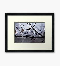 Winter Leaves with Water Drops Framed Print