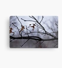 Winter Leaves with Water Drops Metal Print