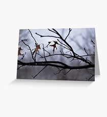 Winter Leaves with Water Drops Greeting Card
