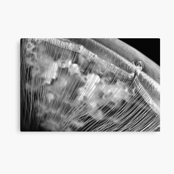 Moon Beads (Moon Jellyfish) Canvas Print