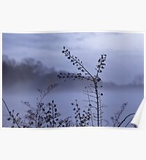 Foggy Winter Botanicals in Landscape Poster