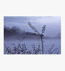 Foggy Winter Botanicals in Landscape Photographic Print