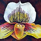 Orchid Arc by Amanda  Shelton