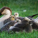 Taken Under Moms Wing by laureenr