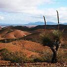 Flinders Ranges, South Australia by Nick Hunt