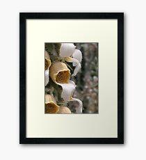 Botanical Framed Print