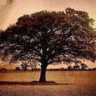 Tree in Field, Lashbrook, East Devon by Mike  Waldron