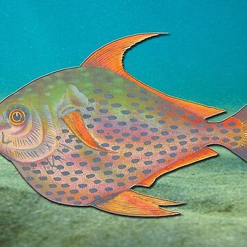 Hand coloured sketch vintage tropical fish by ACoetzer