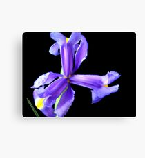 Wonderful flower. Canvas Print