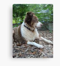 This is Buddy...who came to stay Metal Print