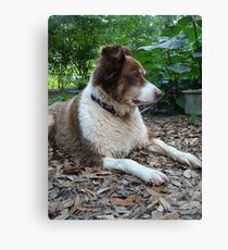 This is Buddy...who came to stay Canvas Print