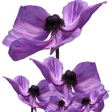 Flower Tee 2 by CarolM