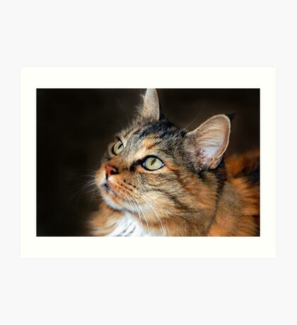 C C the Maine Coon Art Print