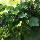 Green grapes by MendesMay