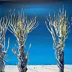 Dutch Pollard Willows (Collage) by Olga van Dijk