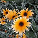 Sunshine yellow flowers by Victoria McGuire