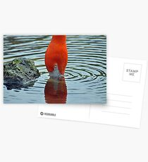 Two in One Flamingo Postcards