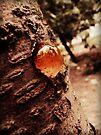 cherry tree's nipple by schizomania
