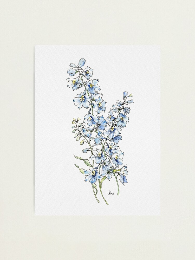 Alternate view of Blue Delphinium Flowers Photographic Print