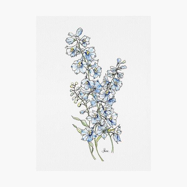 Blue Delphinium Flowers Photographic Print