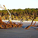 Hunting Island Beach by Picture-It