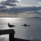 Seagull watching kayayer, photograph by Vic Potter by Vic Potter