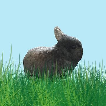 Cute Dwarf Rabbit Charity Print - All Proceeds Go Towards WAS Animal Sanctury by leeseylee