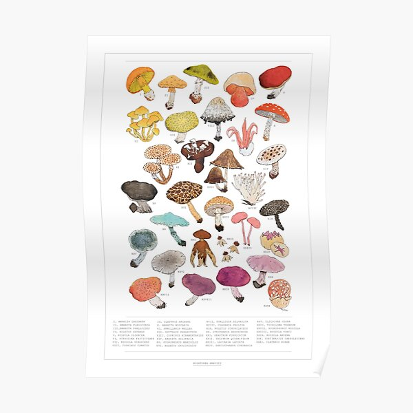 Mushroom Medley with Labels Poster