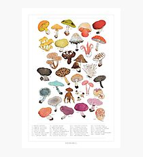 Mushroom Medley with Labels Photographic Print
