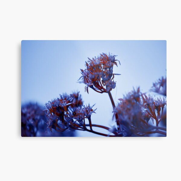 Cold Flowers Metal Print