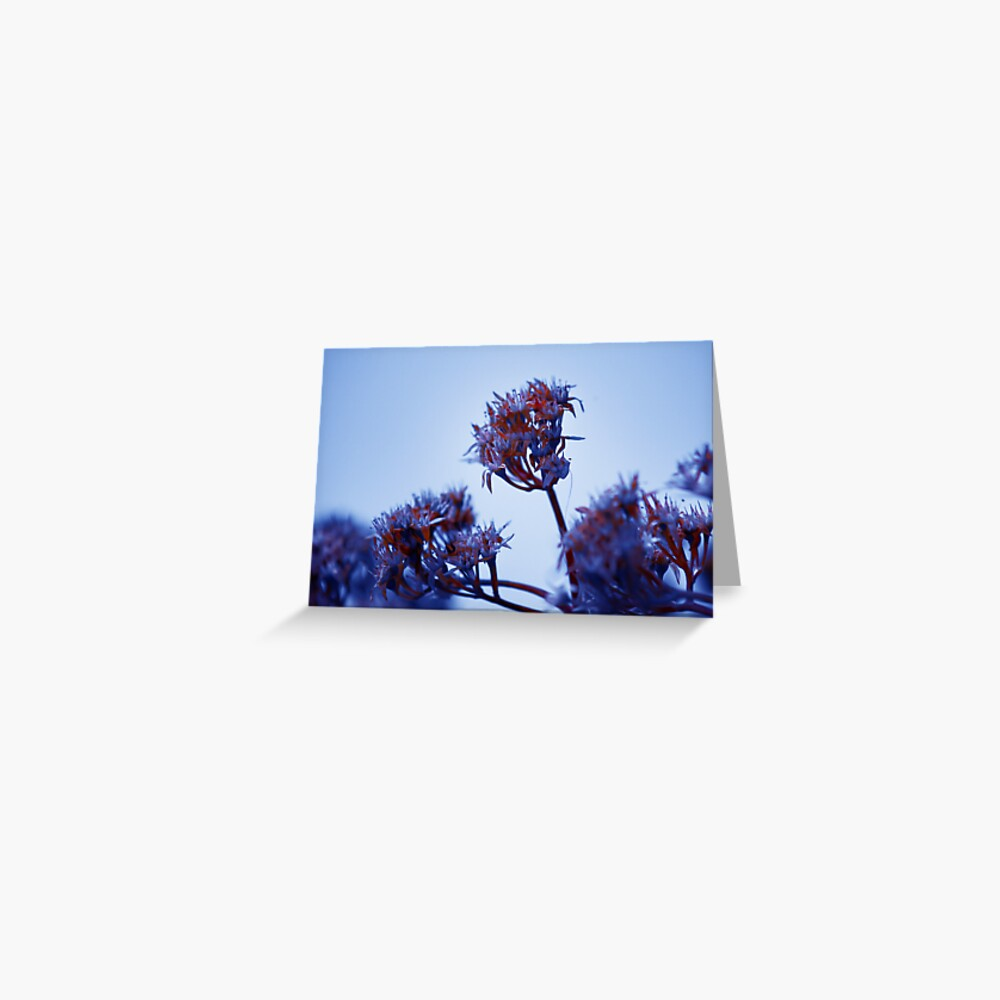 Cold Flowers Greeting Card