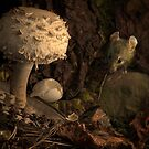 Fungi, Feather , Mouse and Moth by Gazart