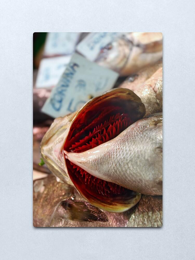 Alternate view of Corvina Fish Metal Print