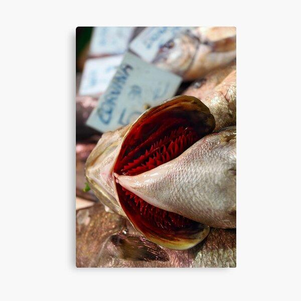 Corvina Fish Canvas Print