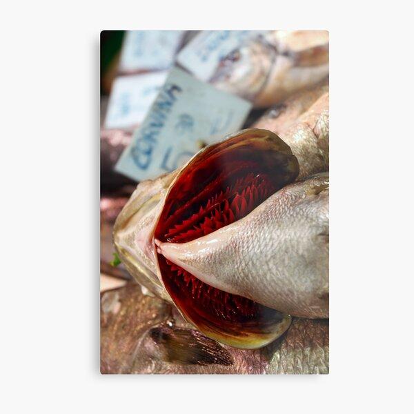 Corvina Fish Metal Print