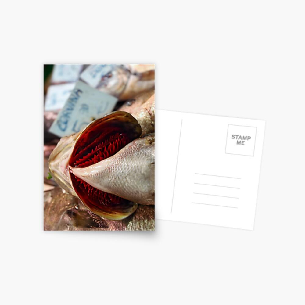 Corvina Fish Postcard