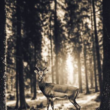 Forest deer photography by Melcu
