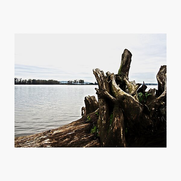 Fallen Tree Photographic Print