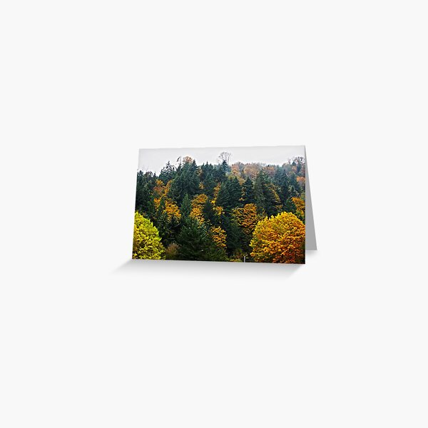 Oregon Trees Greeting Card