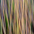 Grasslands by Kitsmumma