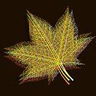 Autumn Leaf #2 by Van Nhan Ngo