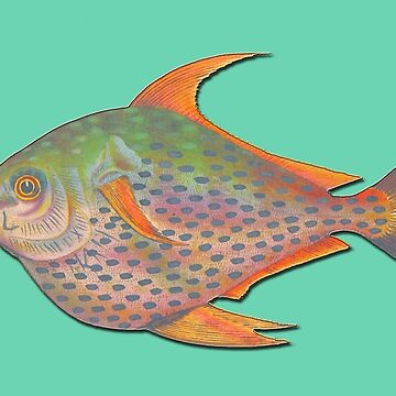 Hand coloured vintage sketch tropical fish by ACoetzer