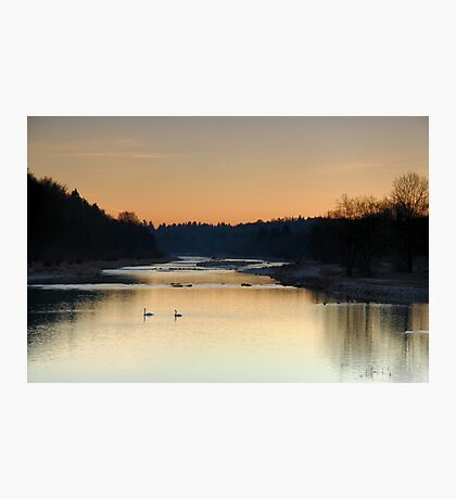 Swans at Dusk on the river Isar Photographic Print