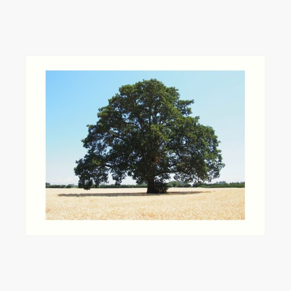 Lonely Tree in Hay Farm Art Print
