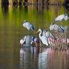 Spoonbill Argument by TJ Baccari Photography