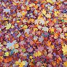 wundervolle, bunte Blätter im Herbst, Baum, Laub, Jahreszeit von rhnaturestyles